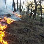 Petugas Kesulitan Padamkan Kebakaran Gunung Arjuno