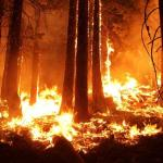 Dikepung Api Gunung Argopuro, 4 Orang Dehidrasi Berat