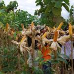 Perhutani Jatim Beri Penyuluhan dan Pendampingan Masyarakat Desa Hutan