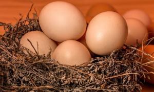 Jangan Telan Mentah-mentah Isu Telur Limbah Plastik