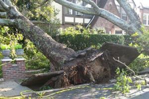 Pohon Tumbang Timpa Rumah dan Putus Jaringan Listrik di Pamekasan