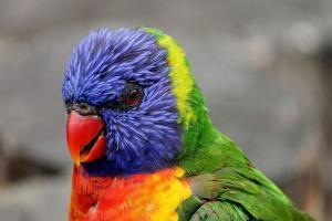 Stres, Burung Langka Sitaan Polisi Mati di Penangkaran