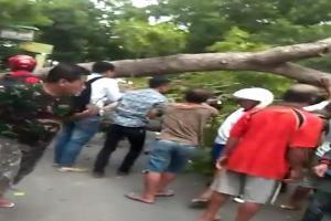 Pohon Besar Tumbang Patahkan Kaki Pengendara Motor