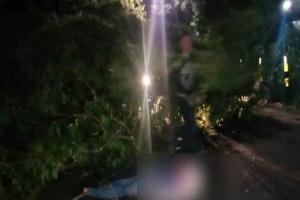 Pohon Tumbang Tewaskan Pengendara Motor Scoopy di Blitar