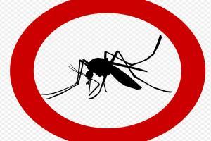 Panen Jentik Nyamuk Cara Pemkot Malang Perangi DBD