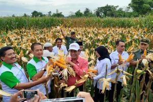 Produksi Jagung Jatim 1,6 Juta TonPeriode Januari-Maret 2019