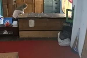 Pencuri Uang Ratusan Juta di Ponpes Ternyata Mahasiswi