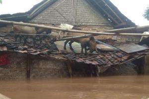 Banjir Paksa Ribuan Warga Madiun Mengungsi