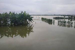 Tanggul Bengawan Solo di Kanor Kritis, Warga Khawatir Jebol