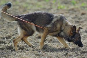 Anjing Pelacak Dilibatkan Cari Korban Longsor Gunung Kapur
