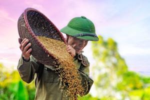 Petani Harap Harga Gabah Wajar, Tak Perlu Tinggi