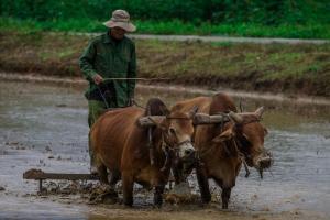 Asuransi Petani dan Peternak Lumajang Tak Terserap Maksimal