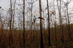 Potensi Kekeringan di Malang Lebih Luas pada 2019
