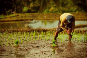Lahan Pertanian di Madiun Susut 9 Hektare Tiap Tahun