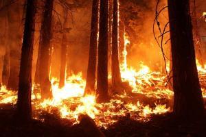 Petugas Pantau Titik Api Gunung Arjuno