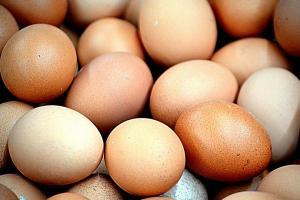Harga Telur Turun, Peternak Kosongkan Kandang