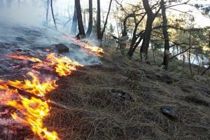 Kebakaran Melanda 6 Gunung di Jatim