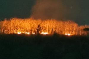 Sudah 17 Kali Kebakaran Hutan Melanda Trenggalek