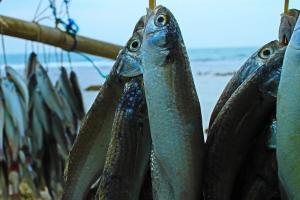 Nilai Tukar Nelayan Jawa Timur Naik