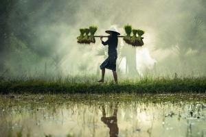 Petani Malang Dapat Keringanan Pajak hingga 50 Persen