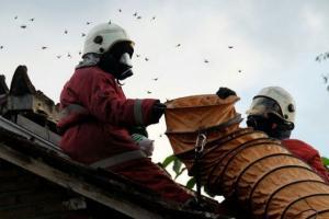 Tawon Vespa Serang Petugas Satpol PP Mojokerto