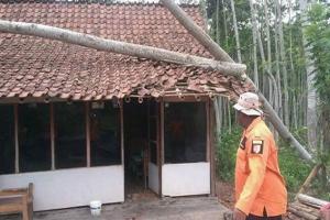Lima Kecamatan di Jember Terdampak Angin Kencang