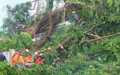 Sejumlah Kecamatan di Kabupaten Jember Dilanda Angin Kencang
